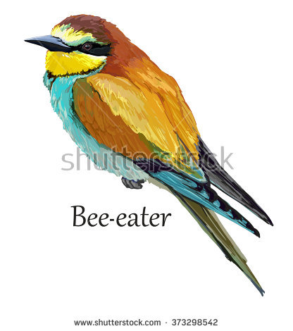 Golden Bee-eater clipart #7, Download drawings