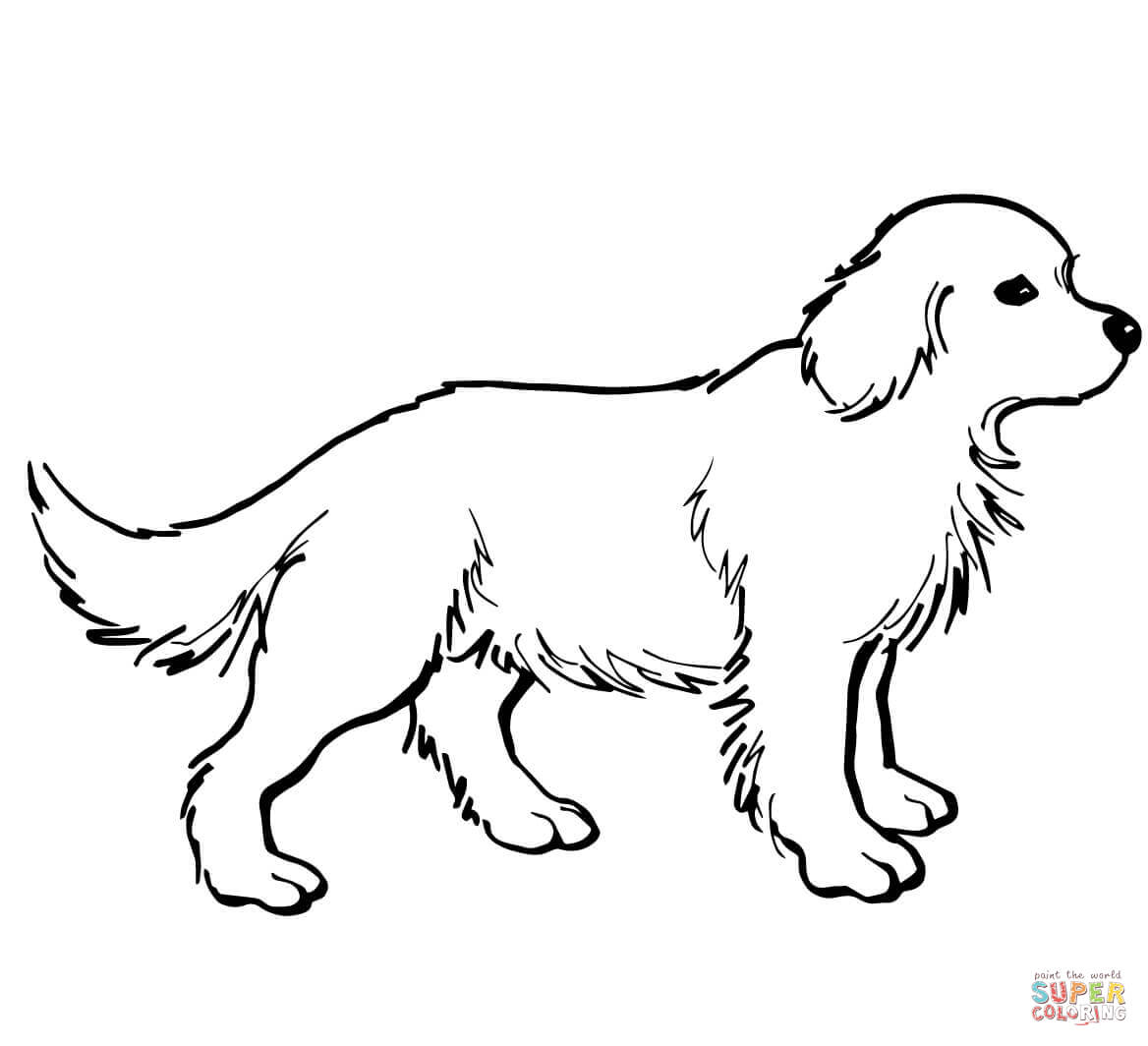 Golden Retriever coloring #9, Download drawings