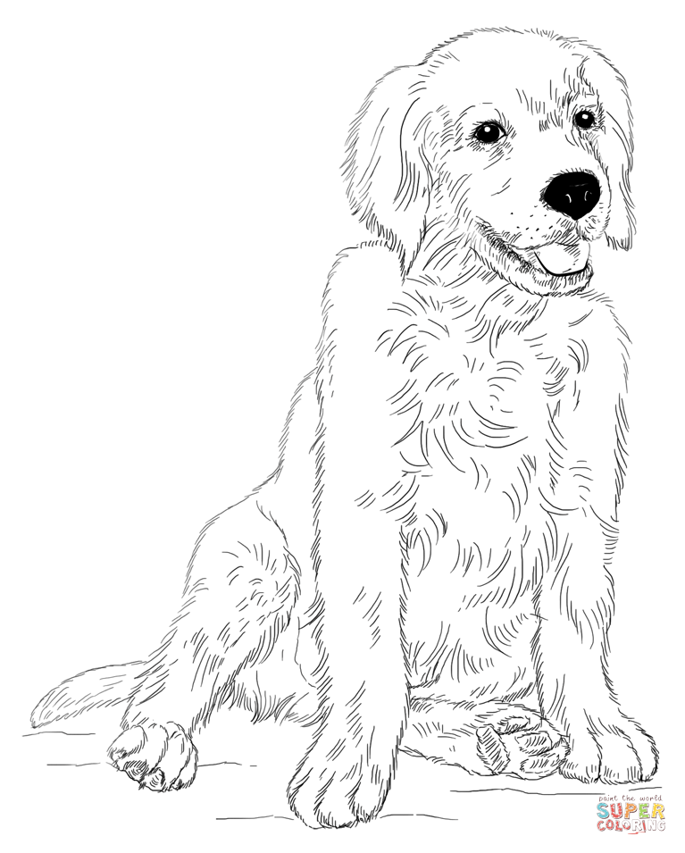 Golden Retriever coloring #10, Download drawings