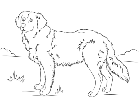 Golden Retriever coloring #17, Download drawings
