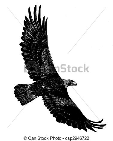 Golden Eagle clipart #2, Download drawings