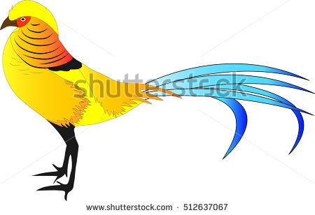Golden Pheasant clipart #7, Download drawings