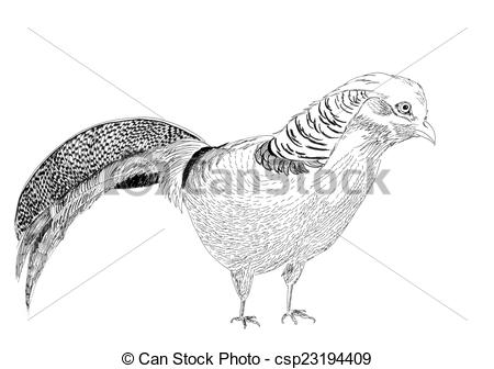 Golden Pheasant clipart #14, Download drawings