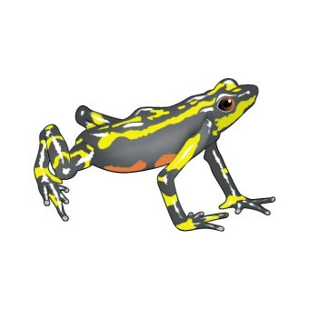 Golden Poison Frog clipart #11, Download drawings