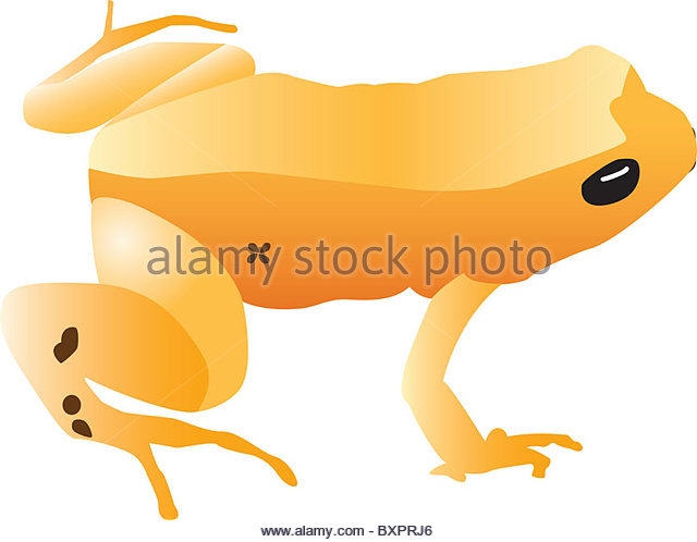 Golden Poison Frog clipart #3, Download drawings
