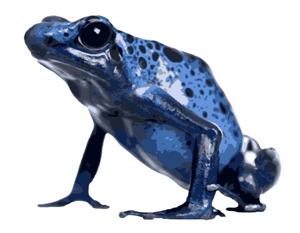 Poison Dart Frog clipart #15, Download drawings