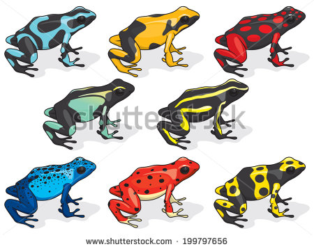 Golden Poison Frog clipart #18, Download drawings