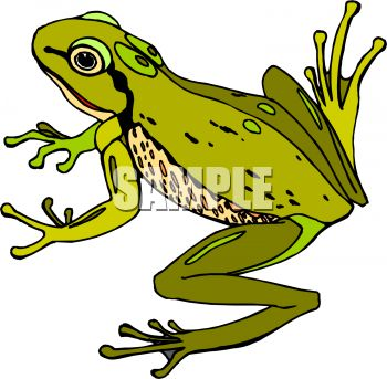 Golden Poison Frog clipart #15, Download drawings