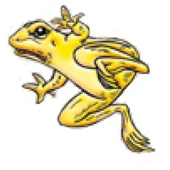 Golden Poison Frog clipart #2, Download drawings