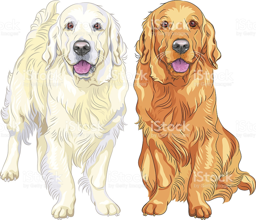 Retriever clipart #10, Download drawings