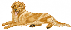 Retriever clipart #12, Download drawings