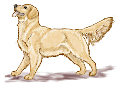 Golden Retriever clipart #20, Download drawings