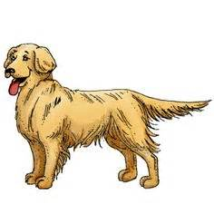 Retriever clipart #13, Download drawings