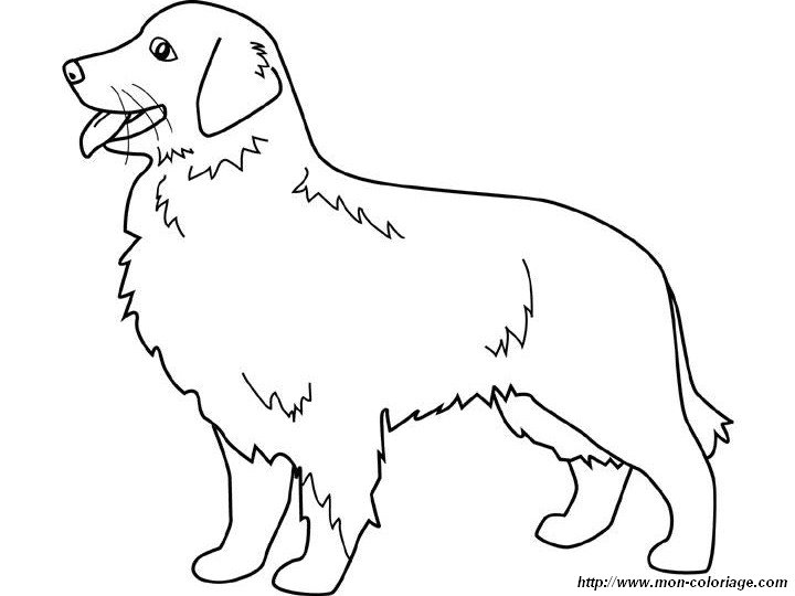 Golden Retriever coloring #2, Download drawings