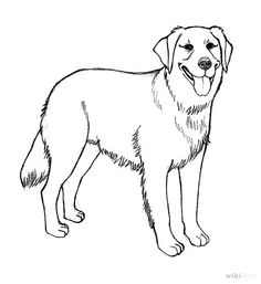 Golden Retriever coloring #19, Download drawings
