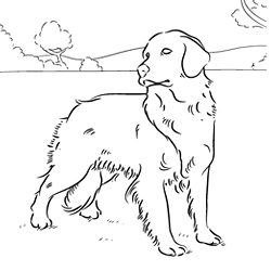 Golden Retriever coloring #15, Download drawings