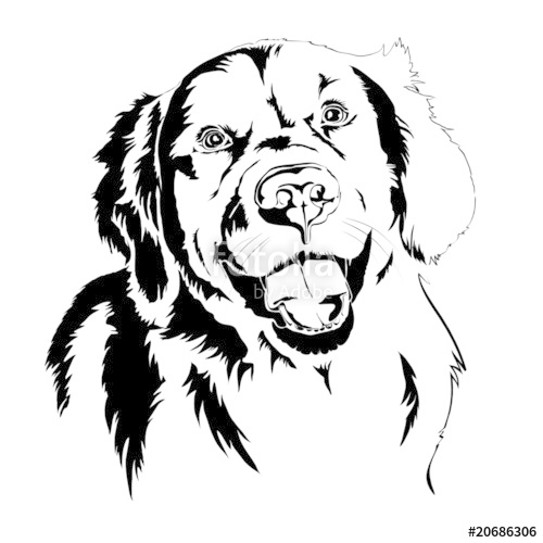 Golden Retriever svg #14, Download drawings