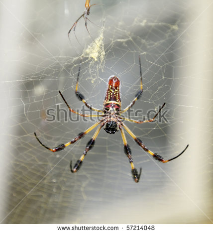 Golden Silk Orb-weaver Spider clipart #12, Download drawings