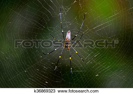 Golden Silk Orb-weaver Spider clipart #6, Download drawings