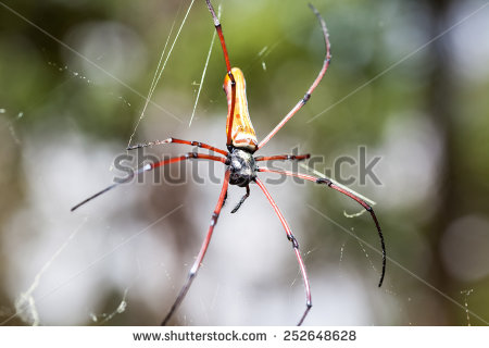 Golden Silk Orb-weaver Spider clipart #8, Download drawings