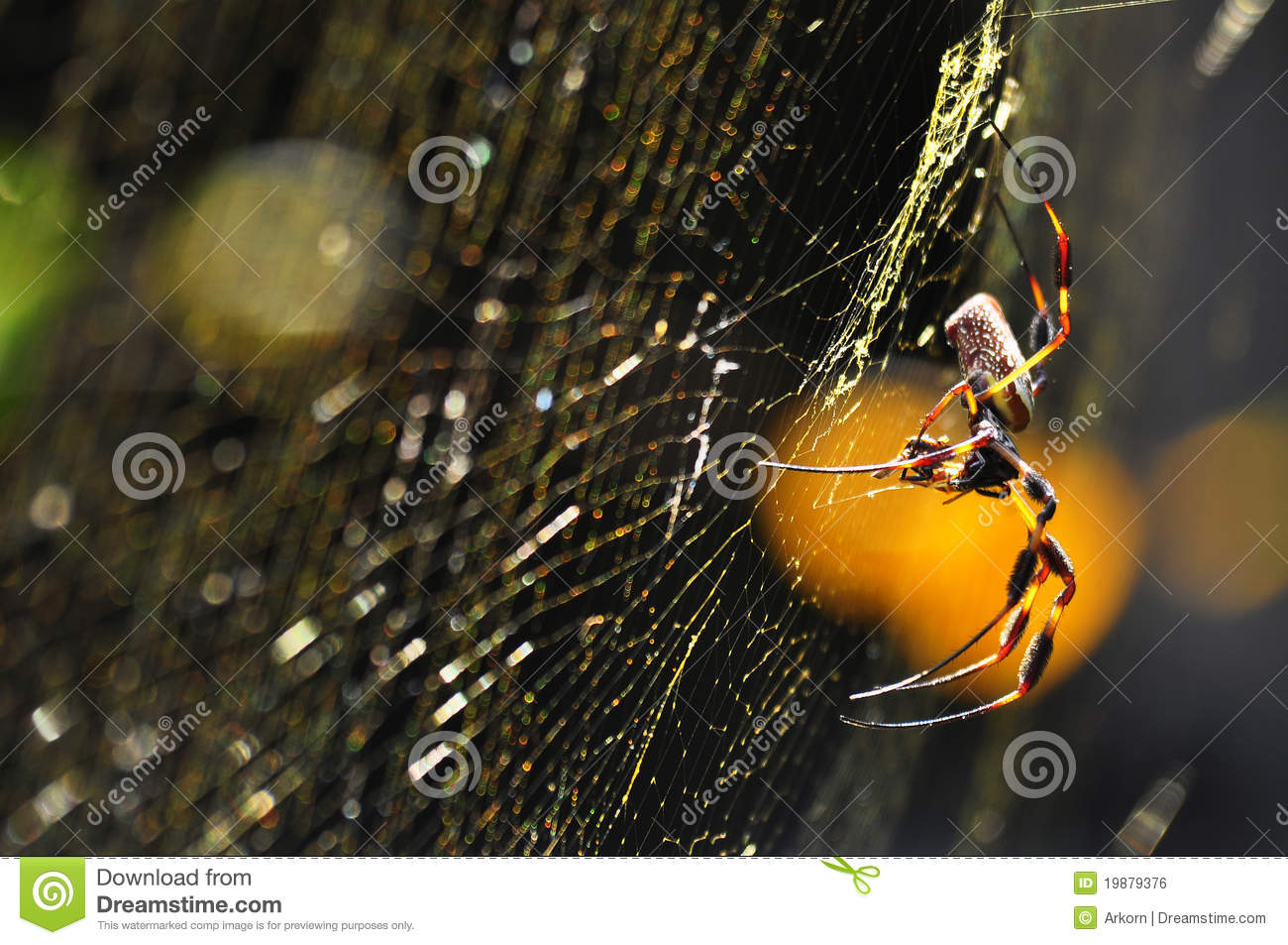 Golden Silk Orb-weaver Spider clipart #5, Download drawings