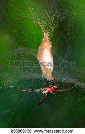 Golden Silk Orb-weaver Spider clipart #4, Download drawings