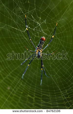 Golden Silk Orb-weaver Spider clipart #3, Download drawings