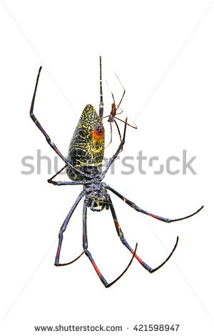 Golden Silk Orb-weaver Spider clipart #2, Download drawings