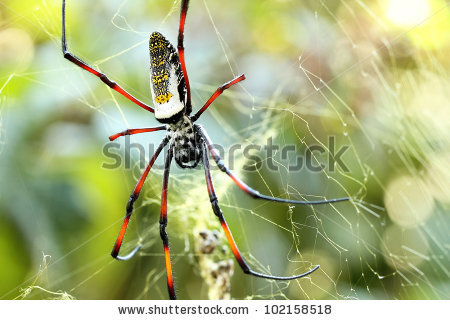 Golden Silk Orb-weaver Spider clipart #17, Download drawings