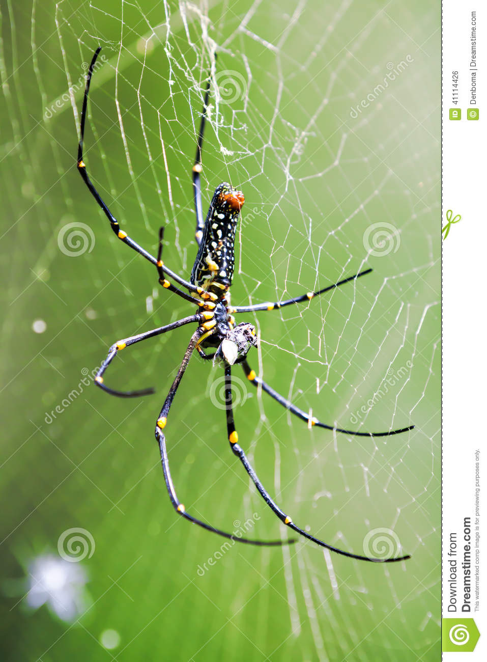 Golden Silk Orb-weaver Spider clipart #18, Download drawings
