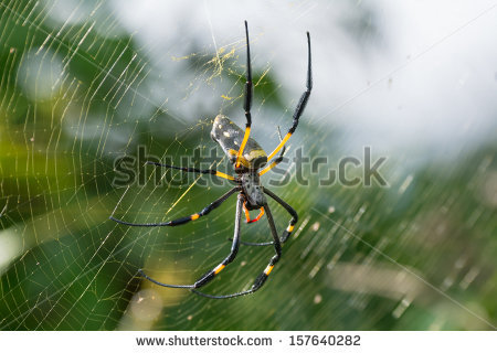 Golden Silk Orb-weaver Spider clipart #10, Download drawings
