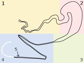 Golden Silk Orb-weaver Spider svg #17, Download drawings