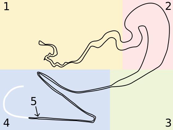 Golden Silk Orb-weaver Spider svg #18, Download drawings