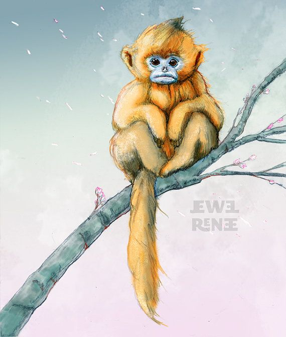 Golden Snub-nosed Monkey svg #11, Download drawings