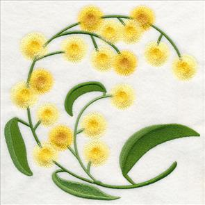 Golden Wattle clipart #15, Download drawings