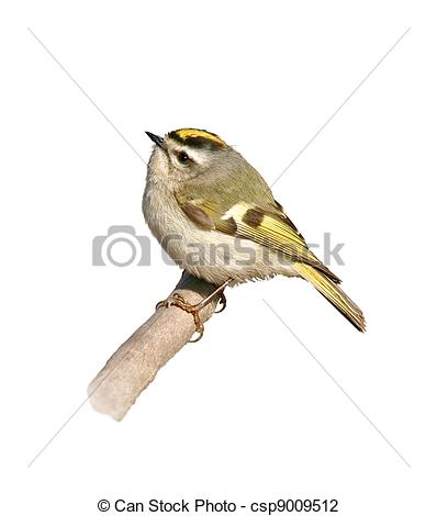 Golden-crowned Kinglet clipart #14, Download drawings