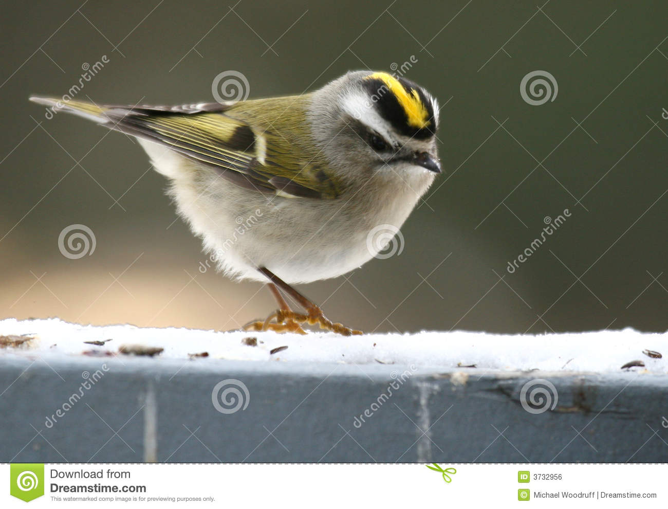 Golden-crowned Kinglet clipart #20, Download drawings