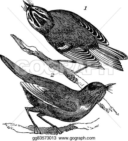 Golden-crowned Kinglet clipart #13, Download drawings