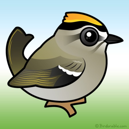 Golden-crowned Kinglet clipart #19, Download drawings