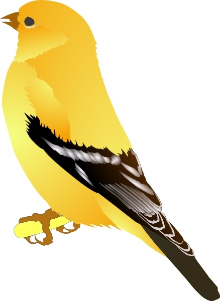 Goldfinch clipart #19, Download drawings