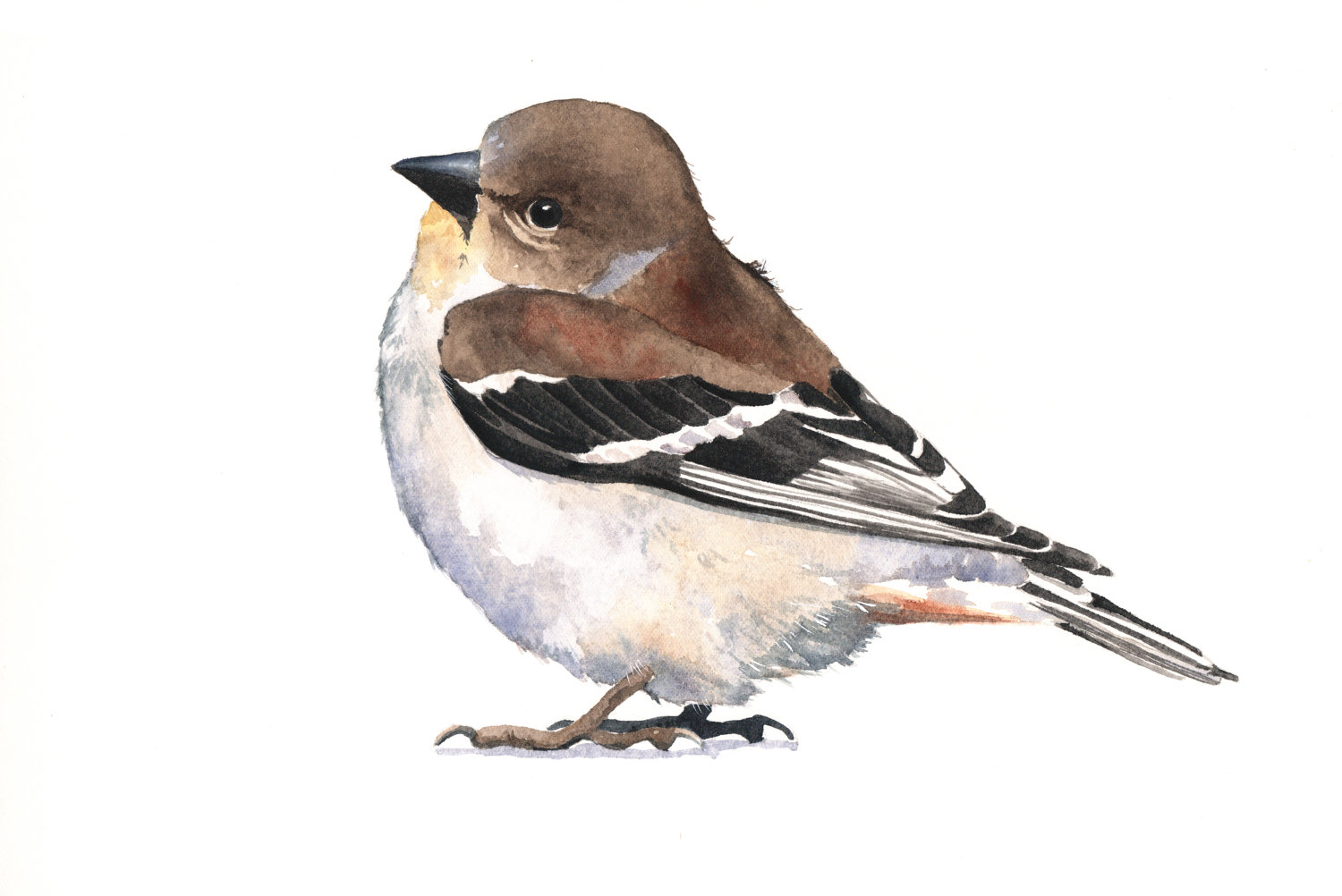 Goldfinch clipart #9, Download drawings
