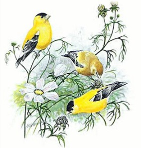 Goldfinch clipart #10, Download drawings