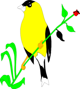 Goldfinch clipart #4, Download drawings