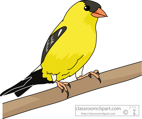 Goldfinch clipart #15, Download drawings