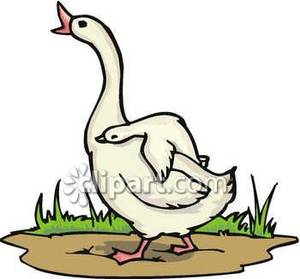Goose clipart #10, Download drawings