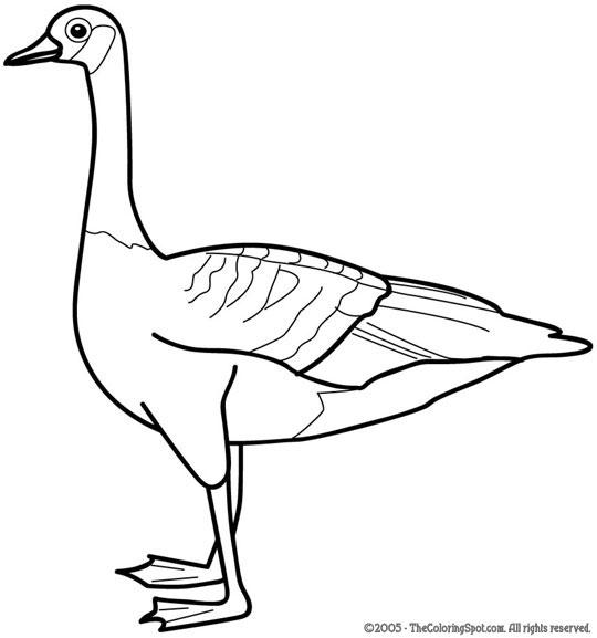 Goose coloring #6, Download drawings