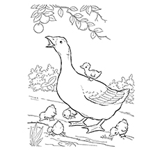 Pink-footed Goose coloring #15, Download drawings