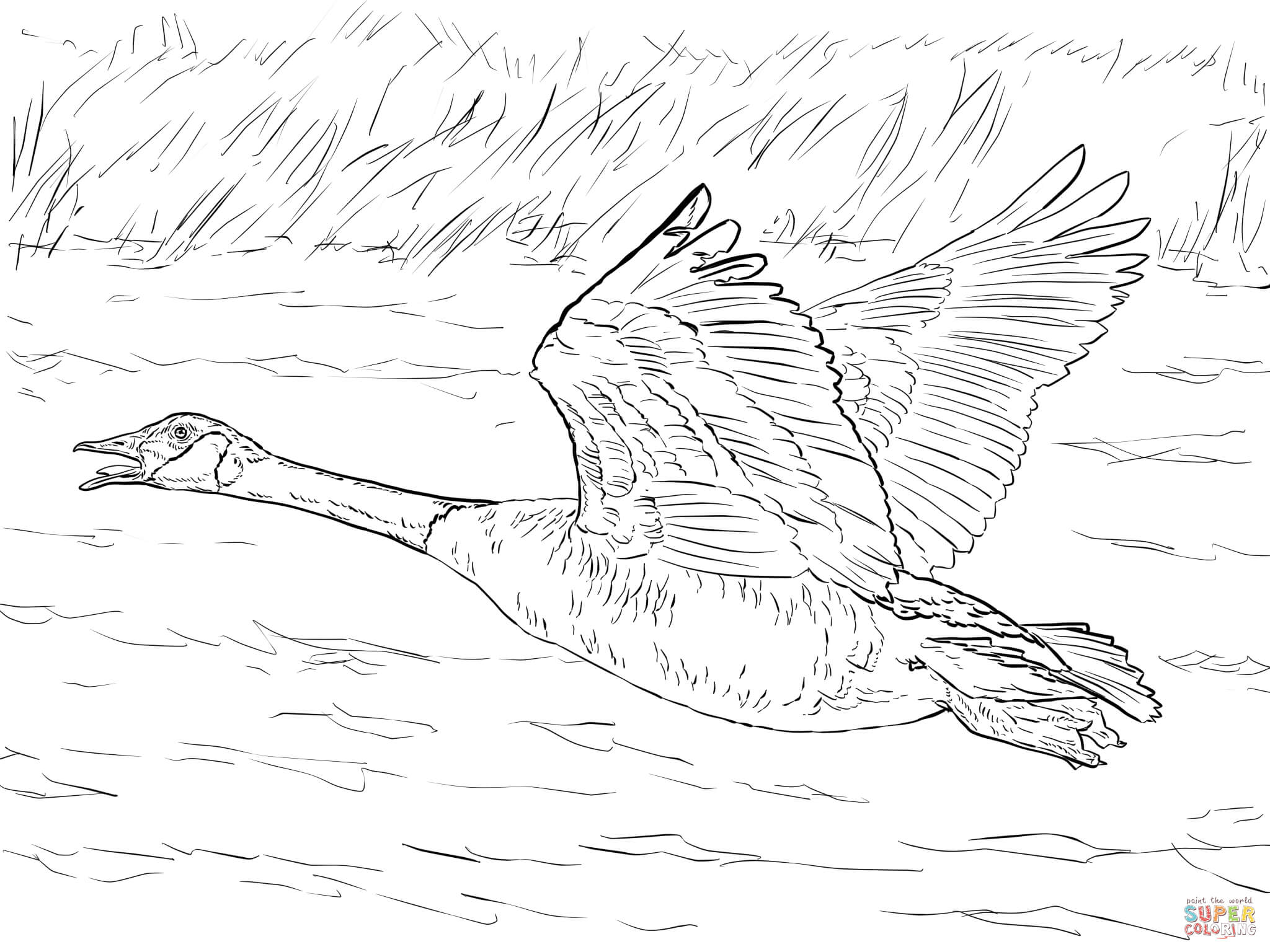 Geese Migration coloring #2, Download drawings