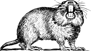 Gopher clipart #3, Download drawings