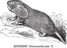 Gopher clipart #8, Download drawings